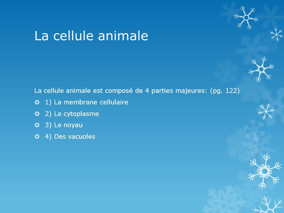 La cellule animale La cellule animale est composé de 4 parties majeures: (pg. 122) 1) La membrane cellulaire 2) Le cytoplasme 3) Le noyau 4) Des vacuo