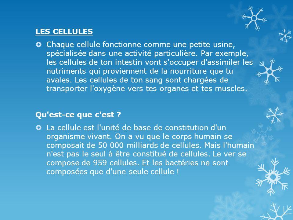 LES CELLULES Chaque cellule fonctionne comme une petite usine, spécialisée dans une activité particulière. Par exemple, les cellules de ton intestin v