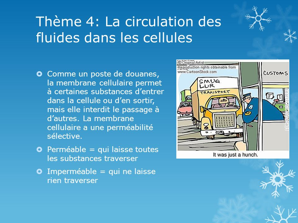 Thème 4: La circulation des fluides dans les cellules Comme un poste de douanes, la membrane cellulaire permet à certaines substances dentrer dans la cellule ou den sortir, mais elle interdit le passage à dautres.