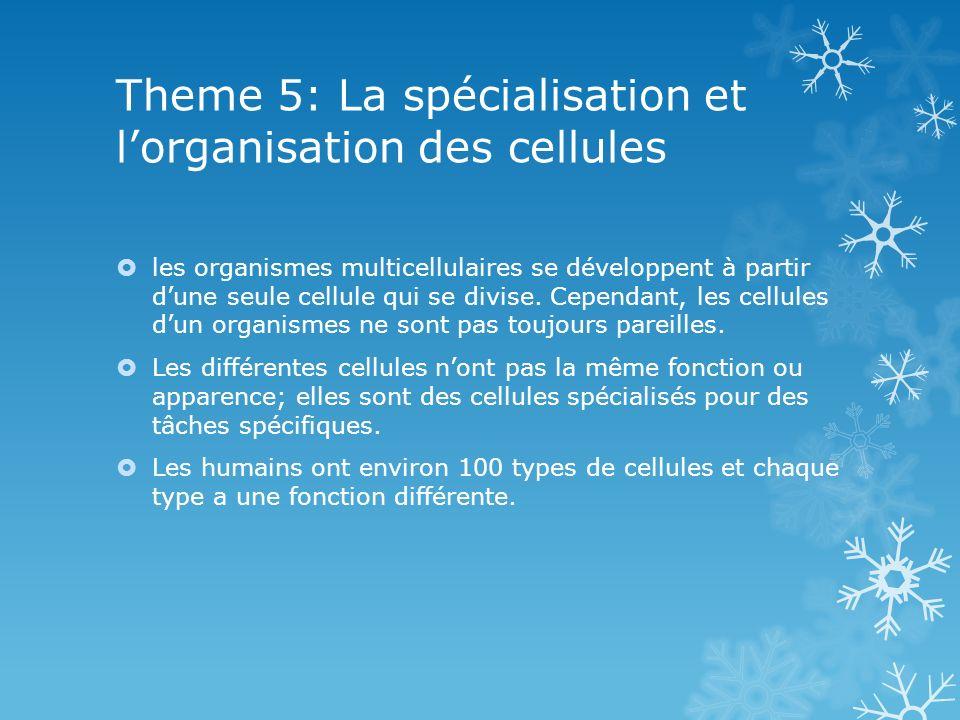 Theme 5: La spécialisation et lorganisation des cellules les organismes multicellulaires se développent à partir dune seule cellule qui se divise.