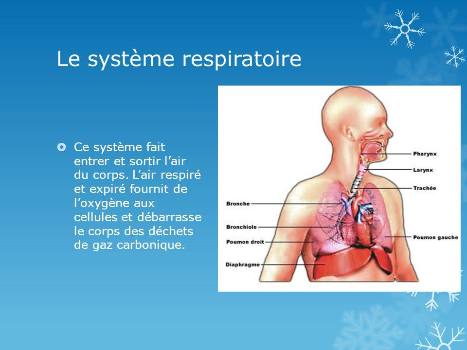 Le système respiratoire Ce système fait entrer et sortir lair du corps. Lair respiré et expiré fournit de loxygène aux cellules et débarrasse le corps