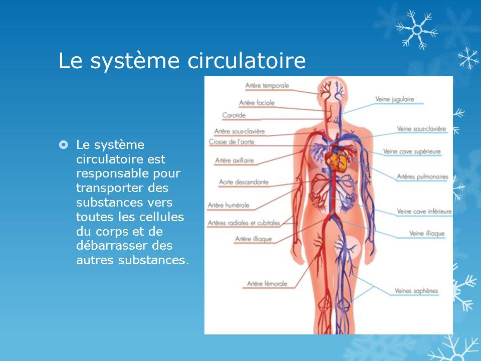 Le système circulatoire Le système circulatoire est responsable pour transporter des substances vers toutes les cellules du corps et de débarrasser des autres substances.