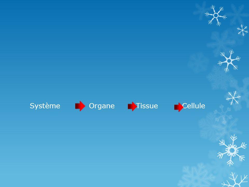 Système Organe Tissue Cellule
