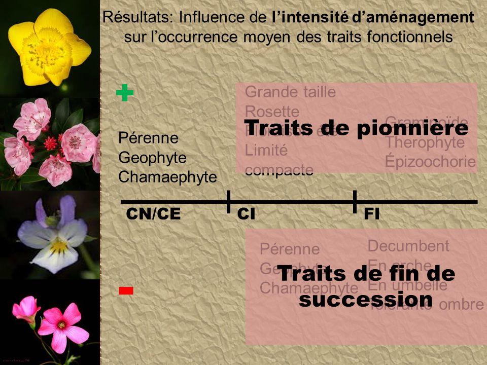 Résultats: Influence de lintensité daménagement sur loccurrence moyen des traits fonctionnels CN/CECIFI + - Graminoïde Therophyte Épizoochorie Decumbe