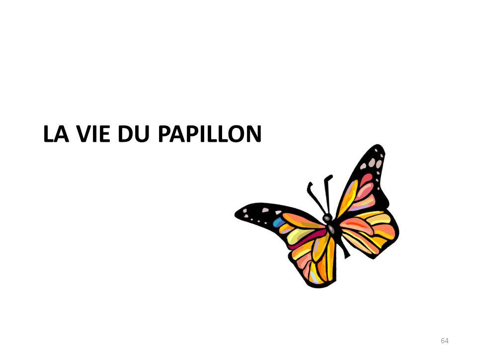 LA VIE DU PAPILLON 64
