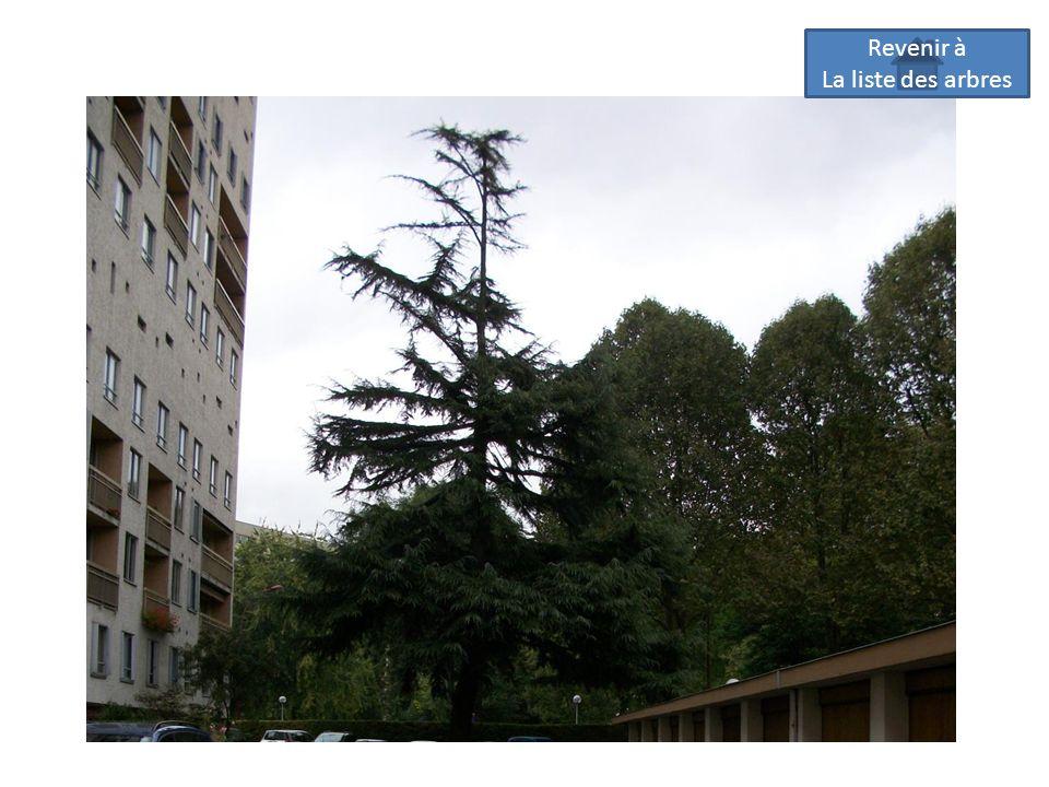 Revenir à La liste des arbres