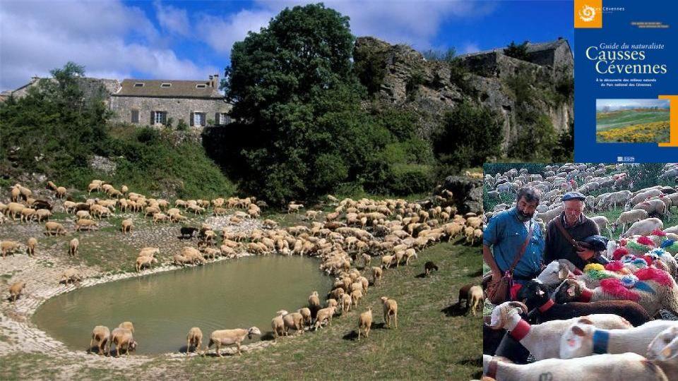 Les Causses et les Cévennes patrimoine mondial de l'UNESCO