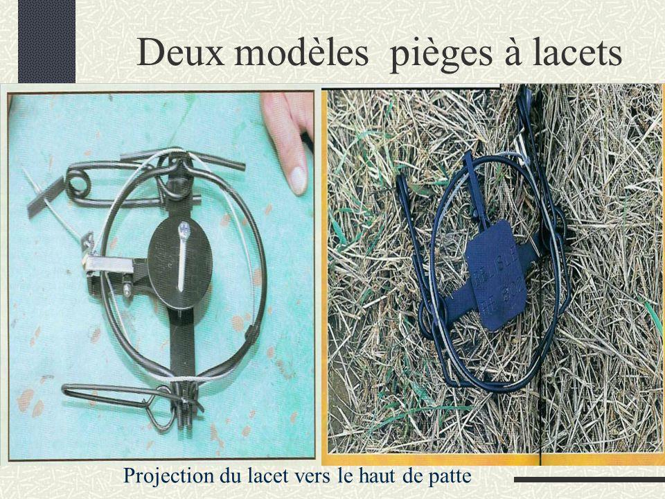 Deux modèles pièges à lacets Projection du lacet vers le haut de patte