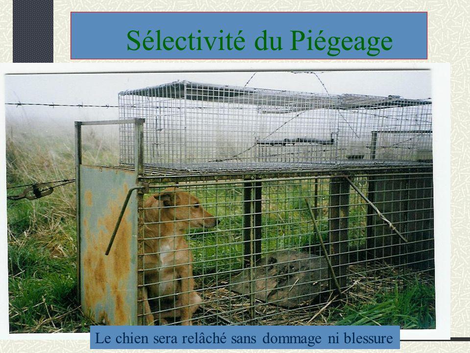 Sélectivité du Piégeage Le chien sera relâché sans dommage ni blessure