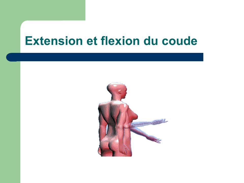 Extension et flexion du coude