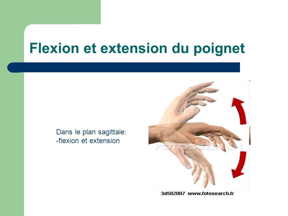 Flexion et extension du poignet Dans le plan sagittale: -flexion et extension