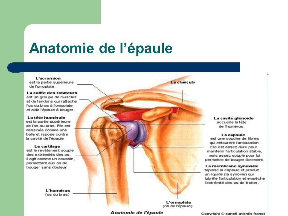 Anatomie de lépaule