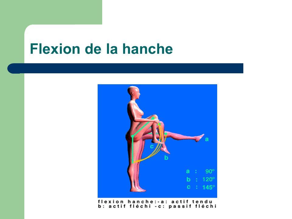 Flexion de la hanche
