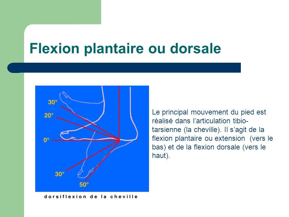 Flexion plantaire ou dorsale Le principal mouvement du pied est réalisé dans larticulation tibio- tarsienne (la cheville). Il sagit de la flexion plan