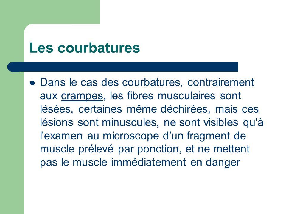 Les courbatures Dans le cas des courbatures, contrairement aux crampes, les fibres musculaires sont lésées, certaines même déchirées, mais ces lésions