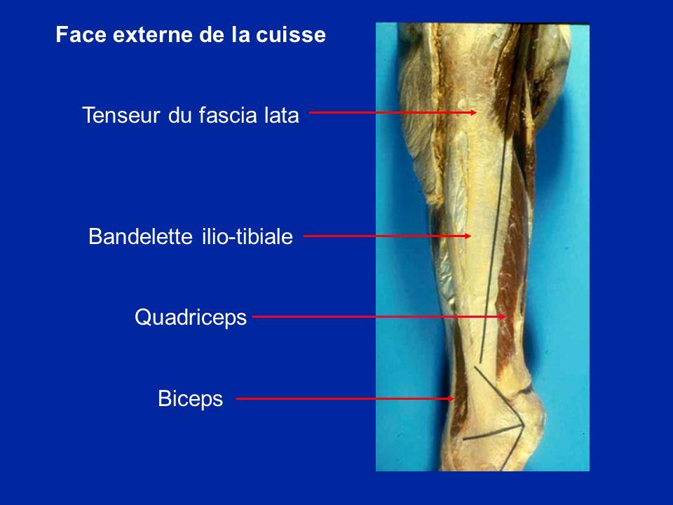 Développement normal de la TTA L ossification commence entre 7 et 9 ans et se fait de façon centrifuge.