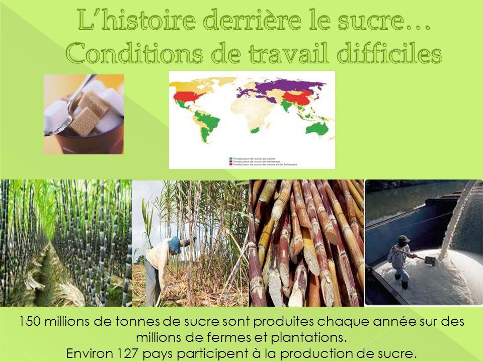 150 millions de tonnes de sucre sont produites chaque année sur des millions de fermes et plantations. Environ 127 pays participent à la production de