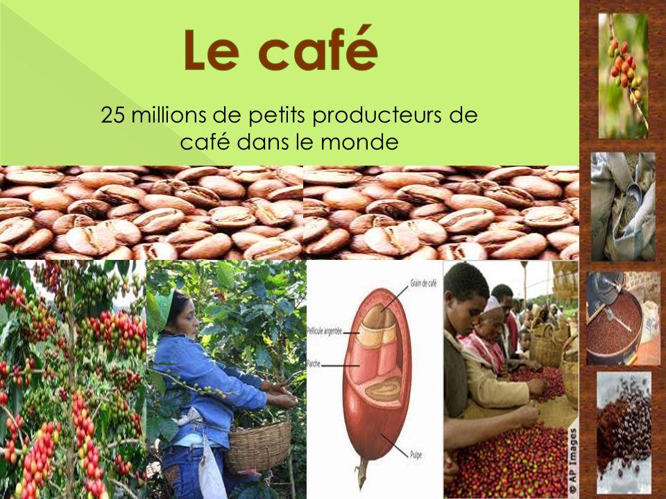 25 millions de petits producteurs de café dans le monde