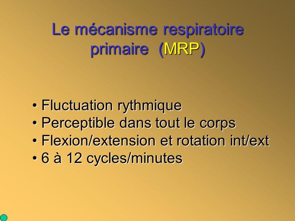 Le mécanisme respiratoire primaire (MRP) Fluctuation rythmique Fluctuation rythmique Perceptible dans tout le corps Perceptible dans tout le corps Fle