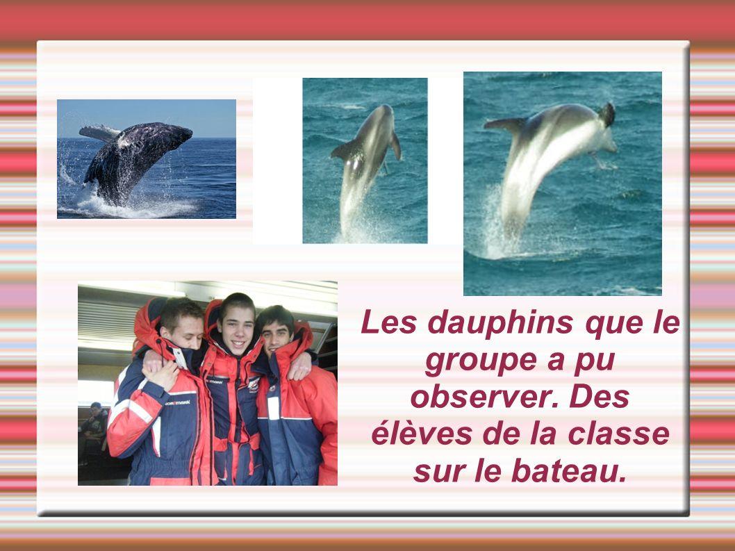 Les dauphins que le groupe a pu observer. Des élèves de la classe sur le bateau.