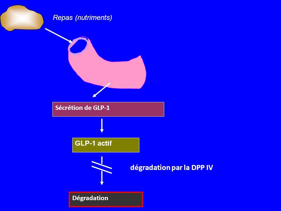 Sécrétion de GLP-1 GLP-1 actif Dégradation dégradation par la DPP IV Repas (nutriments)
