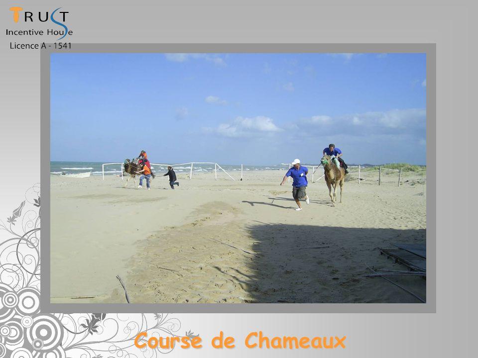 Course de Chameaux