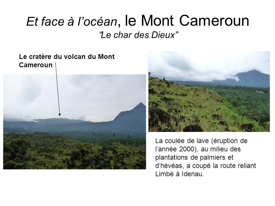 Et face à locéan, le Mont Cameroun Le char des Dieux Le cratère du volcan du Mont Cameroun La coulée de lave (éruption de lannée 2000), au milieu des plantations de palmiers et dhévéas, a coupé la route reliant Limbé à Idenau.