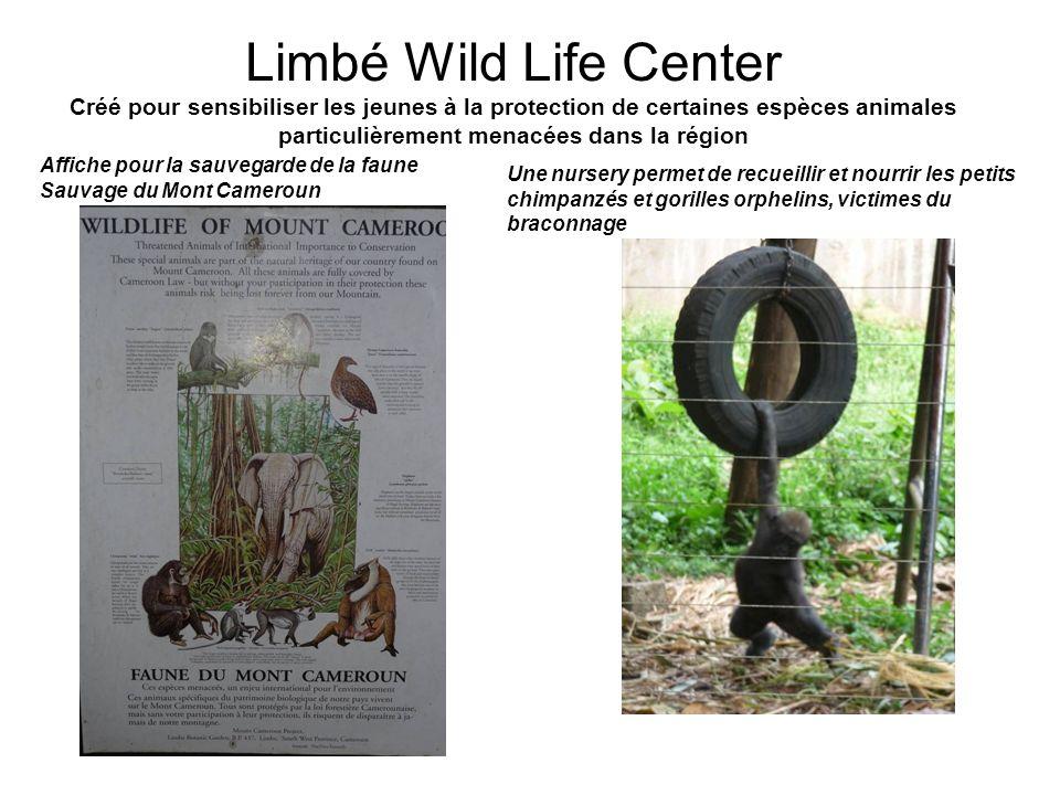 Limbé Wild Life Center Créé pour sensibiliser les jeunes à la protection de certaines espèces animales particulièrement menacées dans la région Une nursery permet de recueillir et nourrir les petits chimpanzés et gorilles orphelins, victimes du braconnage Affiche pour la sauvegarde de la faune Sauvage du Mont Cameroun