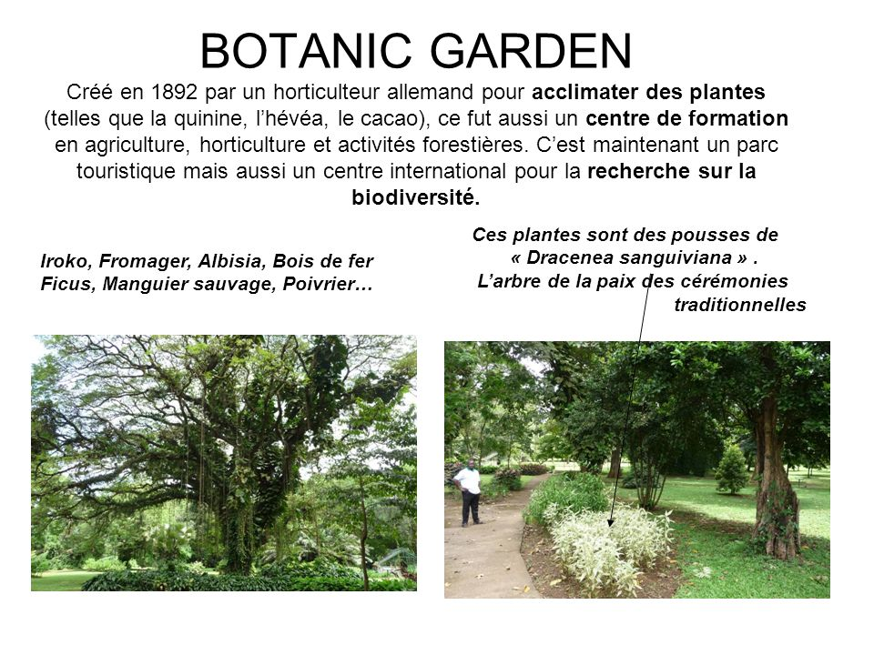 BOTANIC GARDEN Créé en 1892 par un horticulteur allemand pour acclimater des plantes (telles que la quinine, lhévéa, le cacao), ce fut aussi un centre de formation en agriculture, horticulture et activités forestières.