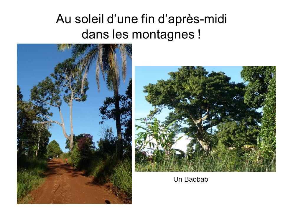 Au soleil dune fin daprès-midi dans les montagnes ! Un Baobab
