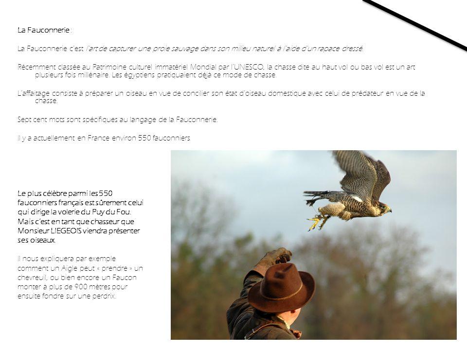La Fauconnerie : La Fauconnerie cest l'art de capturer une proie sauvage dans son milieu naturel à l'aide d'un rapace dressé. Récemment classée au Pat