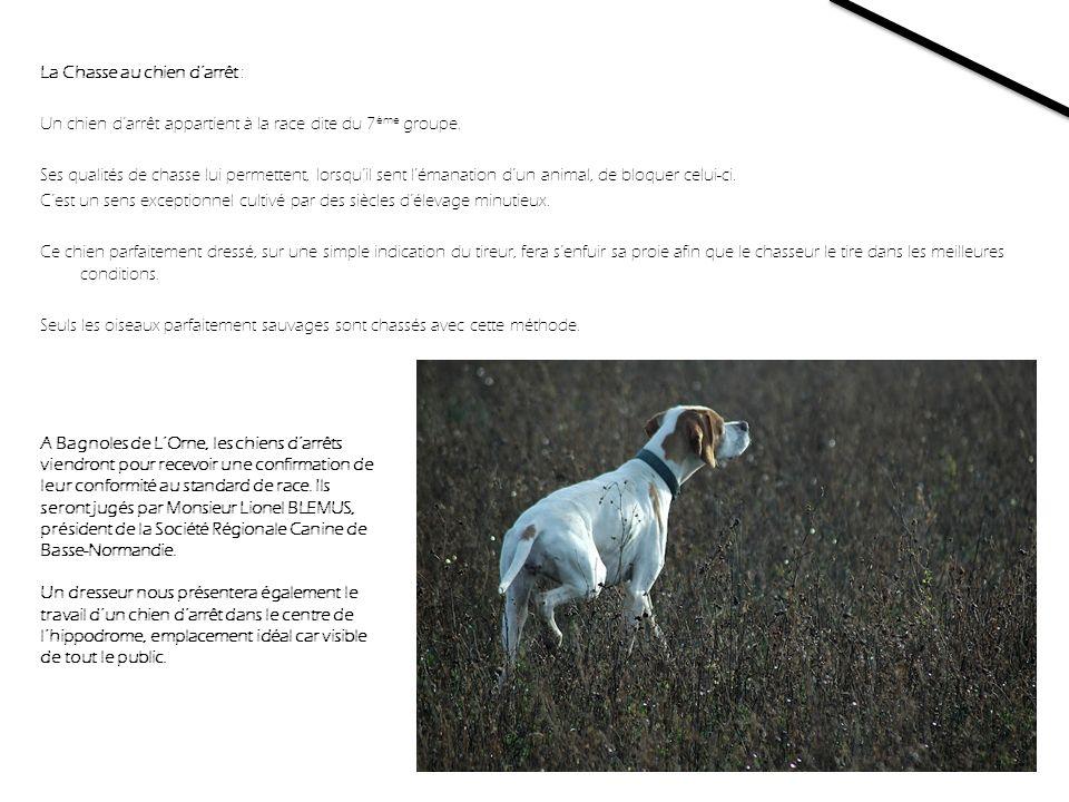 La Chasse au chien darrêt : Un chien darrêt appartient à la race dite du 7 ème groupe. Ses qualités de chasse lui permettent, lorsquil sent lémanation