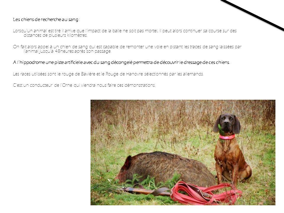 Les chiens de recherche au sang : Lorsquun animal est tiré il arrive que limpact de la balle ne soit pas mortel, il peut alors continuer sa course sur des distances de plusieurs kilomètres.