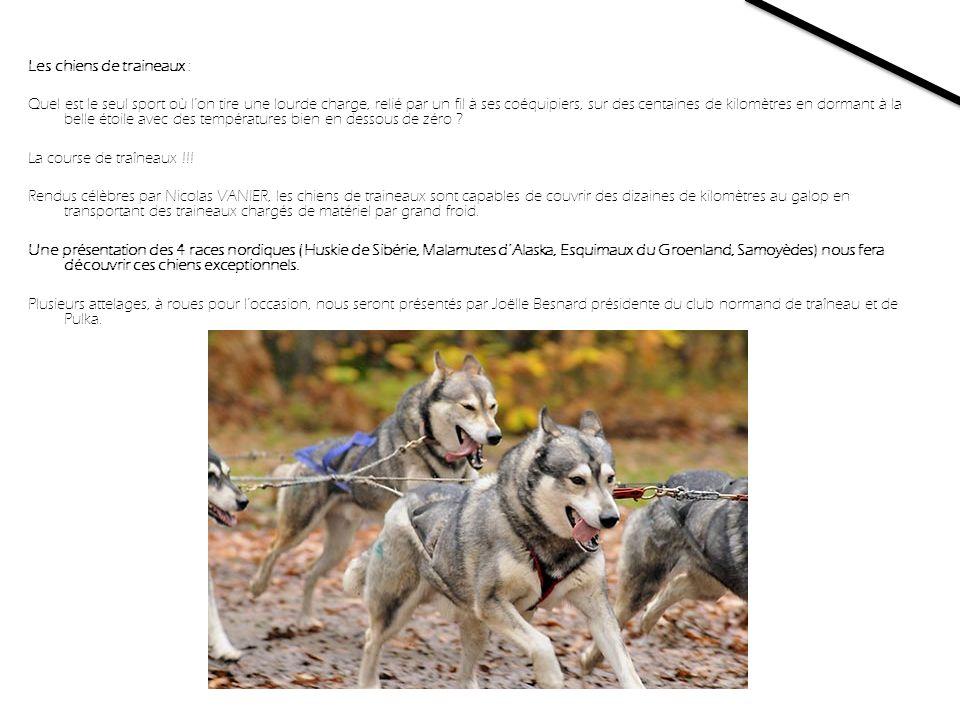 Les chiens de traineaux : Quel est le seul sport où lon tire une lourde charge, relié par un fil à ses coéquipiers, sur des centaines de kilomètres en dormant à la belle étoile avec des températures bien en dessous de zéro .