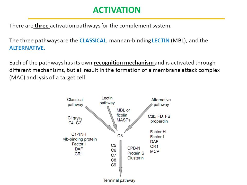 CONTROL OF COMPLEMENT ACTIVATION Because activation of complement is potentially harmful to host cells and disrupts homeostasis, complement activation must be very tightly controlled.