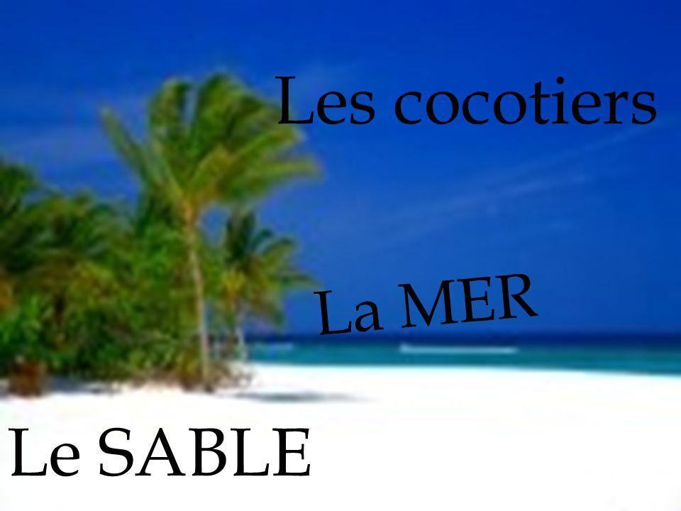 La MER Le SABLE Les cocotiers