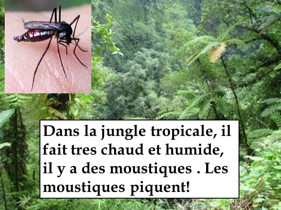 Dans la jungle tropicale, il fait tres chaud et humide, il y a des moustiques.