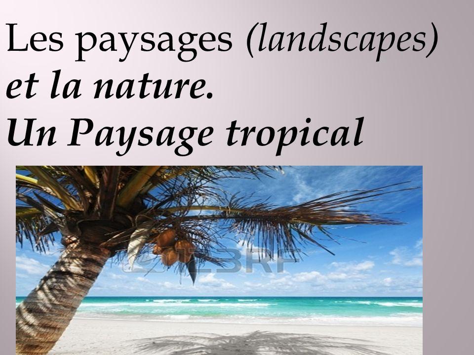 Les paysages (landscapes) et la nature. Un Paysage tropical