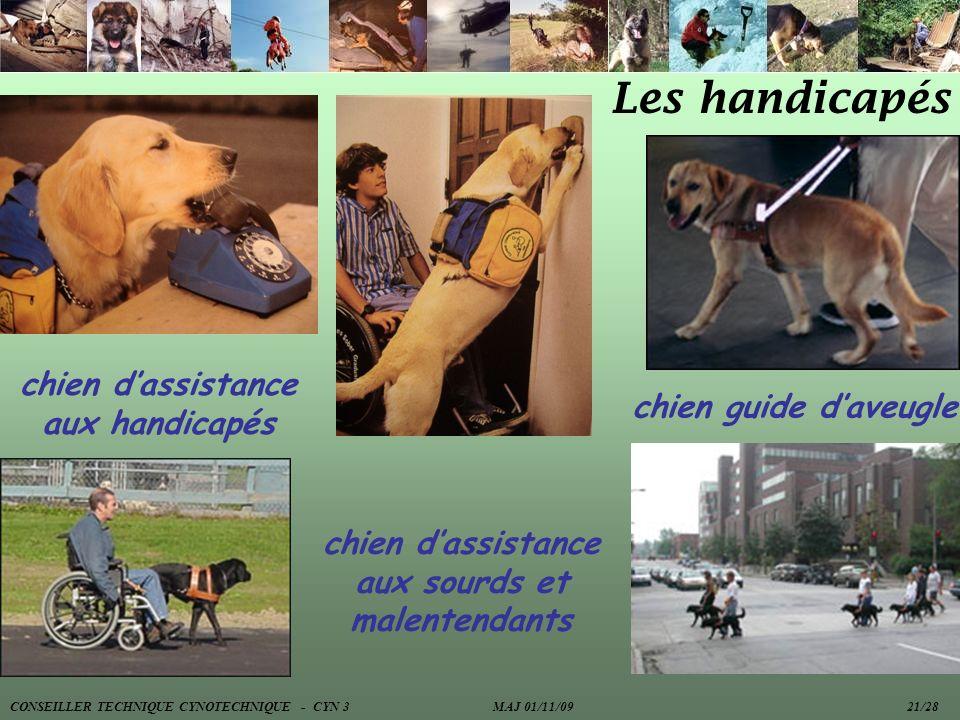 Les handicapés chien guide daveugle chien dassistance aux handicapés chien dassistance aux sourds et malentendants CONSEILLER TECHNIQUE CYNOTECHNIQUE
