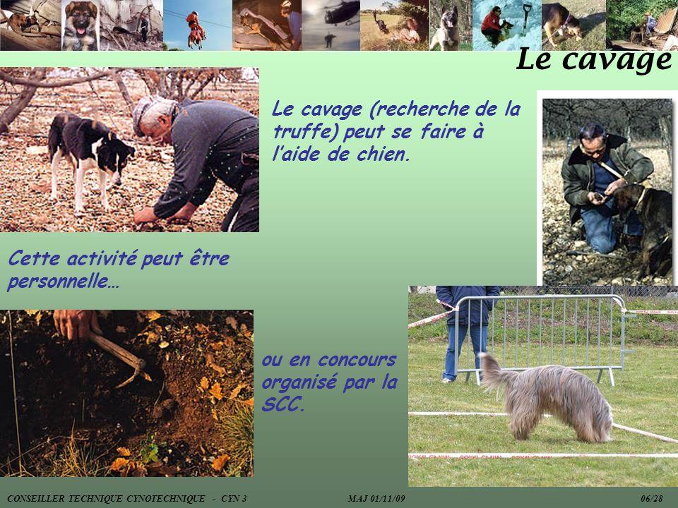 Le cavage Le cavage (recherche de la truffe) peut se faire à laide de chien. Cette activité peut être personnelle… ou en concours organisé par la SCC.