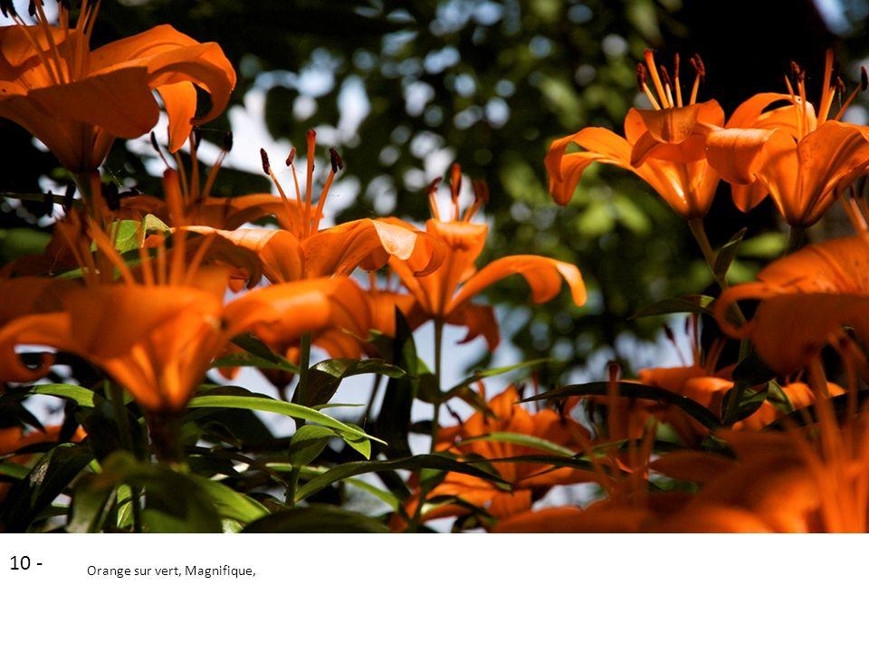 10 - Orange sur vert, Magnifique,