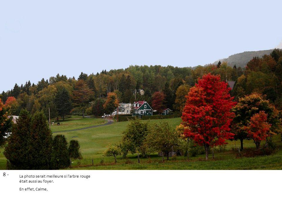 8 - La photo serait meilleure si l'arbre rouge était aussi au foyer. En effet, Calme,