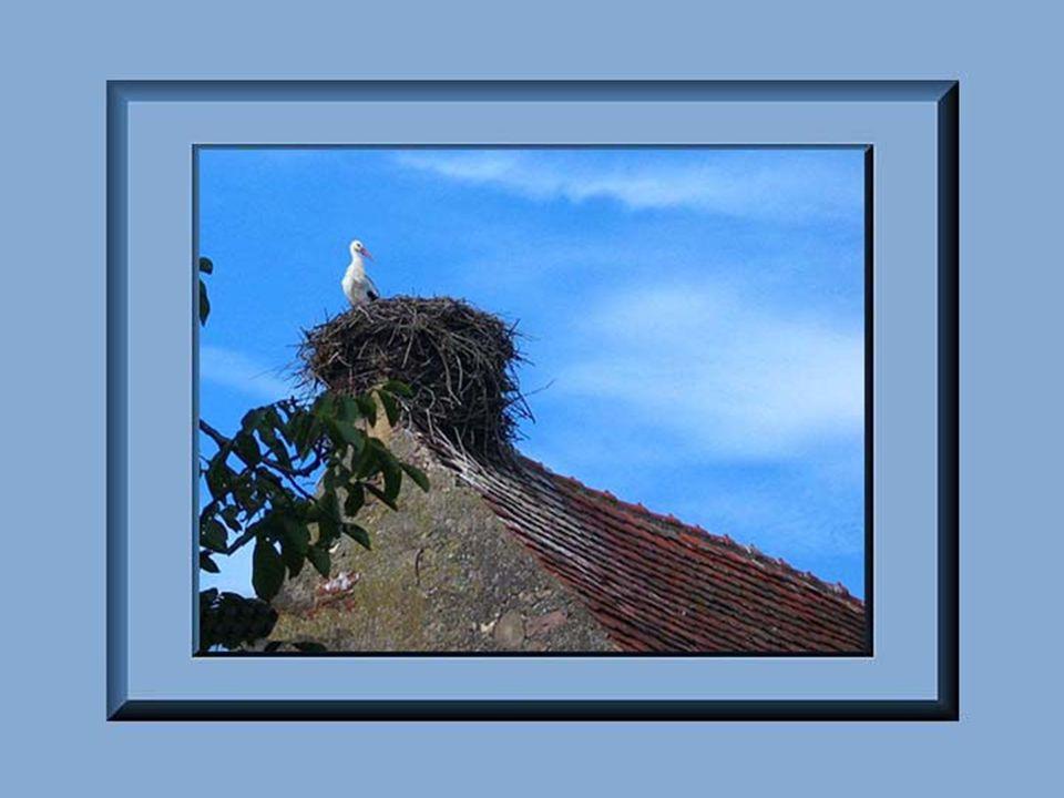 Tout commence en 58 avant Jésus- Christ date à laquelle les Romains font entrer l'Alsace dans l'histoire. Au Ve siècle, les Alamans envahissent l'Alsa