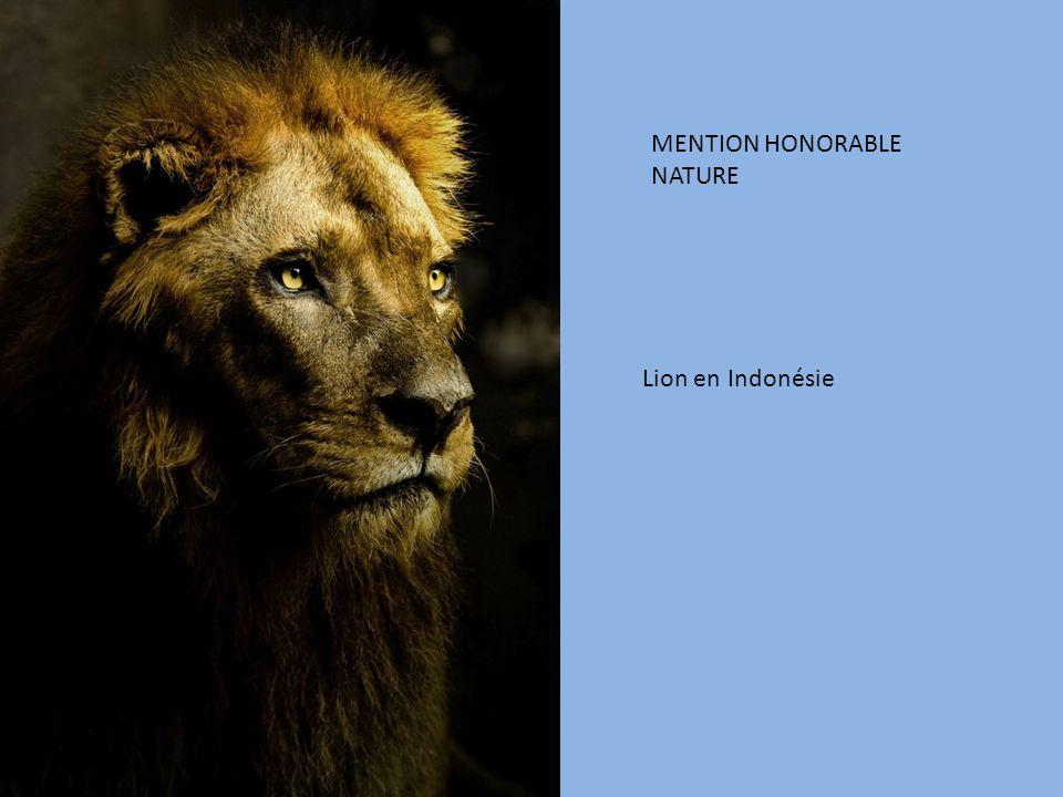 MENTION HONORABLE NATURE Lion en Indonésie