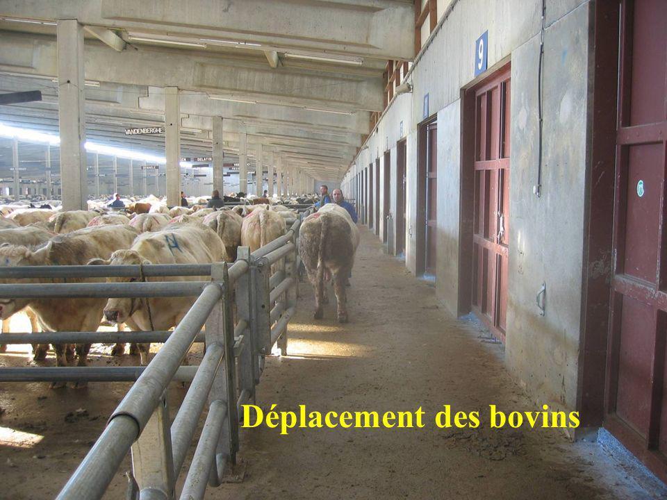Déplacement des bovins