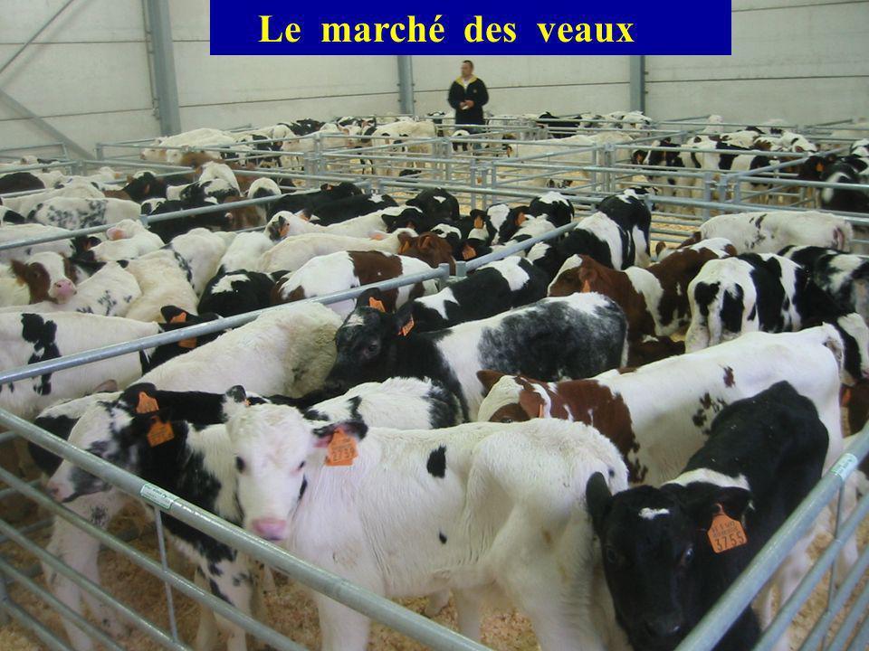 Le marché des veaux