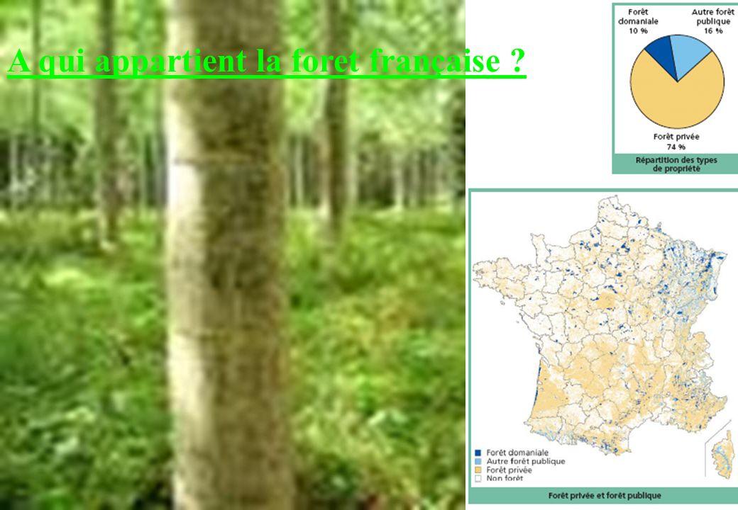 Implantation des scieries en région Auvergne