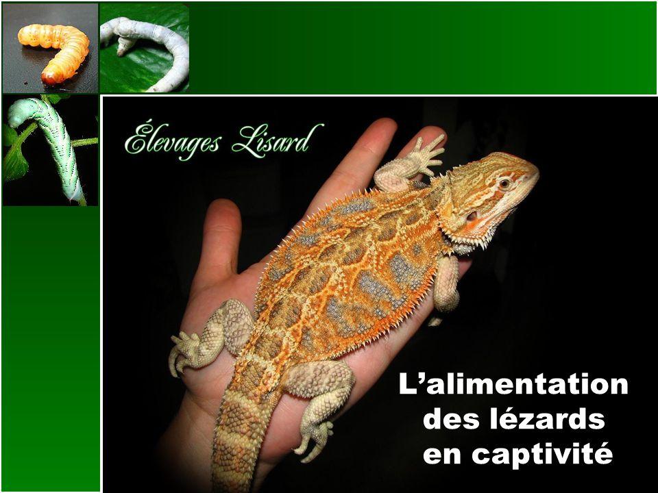 Les insectivores Les insectes nourriciers Les grillons (Acheta domestica): ATTENTION AUX NOMS COMMUNS.