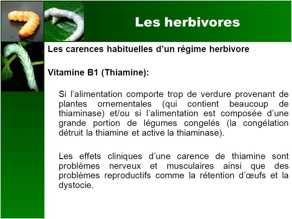 Les herbivores Les carences habituelles dun régime herbivore Vitamine B1 (Thiamine): Si lalimentation comporte trop de verdure provenant de plantes or