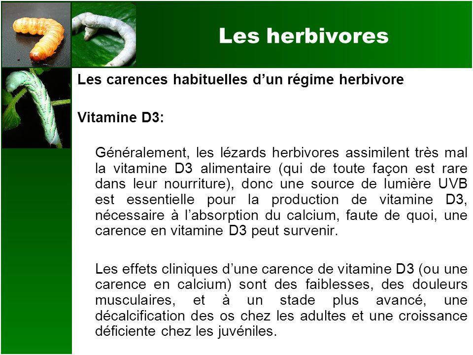 Les herbivores Les carences habituelles dun régime herbivore Vitamine D3: Généralement, les lézards herbivores assimilent très mal la vitamine D3 alim